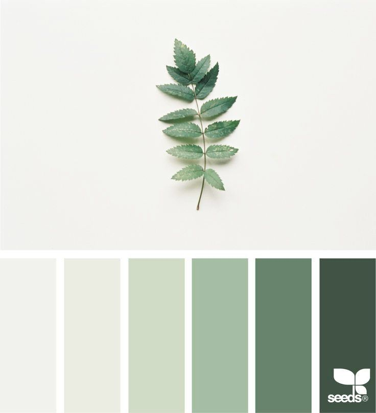 Awesome Sage Green Color Palette Best 25 Sage Color Palette Ideas