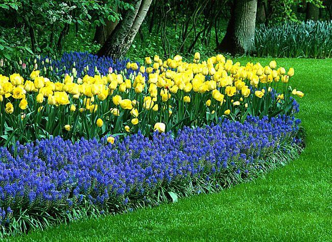 Bulbes de printemps en pots, en rocaille, en prairie ou en massif - Massif haut en couleur