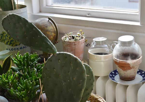 Overturned teacups as mini greenhouses :: Camilla Engman