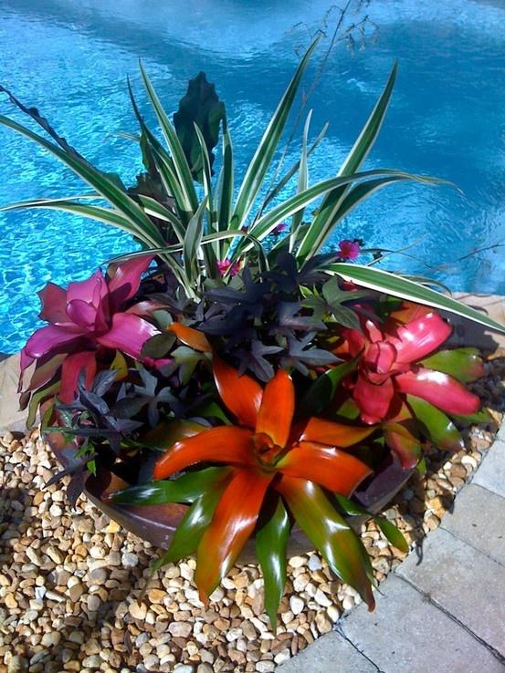 Gorjuss Bromeliads Container Garden L<3VE it!!!