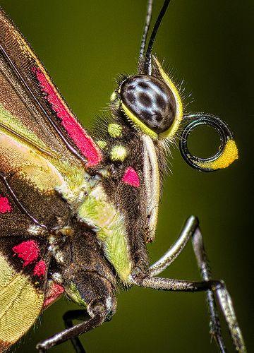 Butterfly Macro | ma