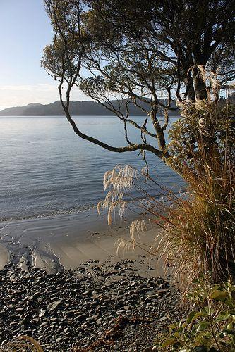 Rakiura Track on Stewart Island, Southland, New Zealand.  I'd love to see Stewart Island but so far haven't traveled farther south than the Moeraki Boulders near Oamaru.