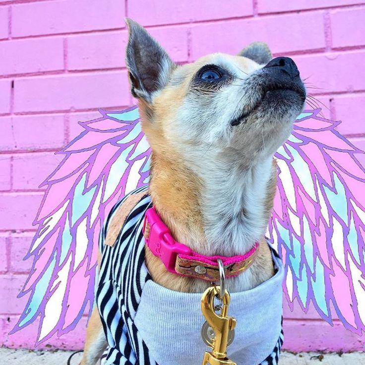 #cartoon #etsy #etsystore #etsyshop #etsyfind #creative #thatsdarling #graphic #design #createhappy #dog #puppy #sunday #sundayfunday #keepitsimple #chill #lifestyle #igersAll the love for Sunday. All the love. pc: @helloitsparis