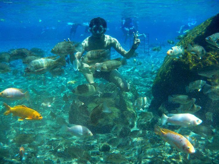 Freshwater Snorkeling! - Umbul Ponggok, North Klaten, Central Java