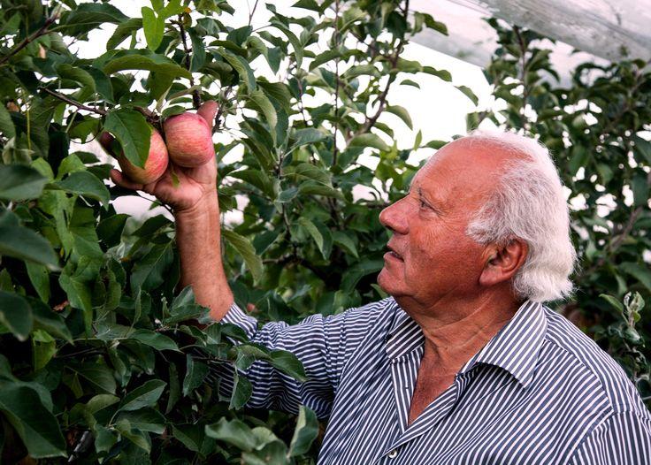 La passione per il #territorio, il rispetto per l' #ambiente e la cura per le nostre #mele sono alla base dei nostri #valori. #MelaDiToscana #MeleLaCoccinella #Amorealprimomorso