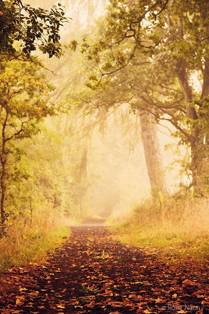 A foggy Perthshire autumnal morning - click to discover how Rosie takes her fog images.