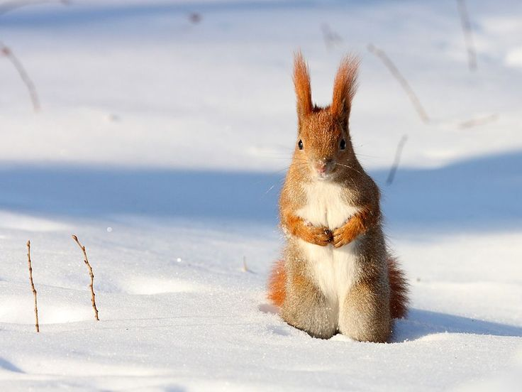 Red Squirrel, hehe!