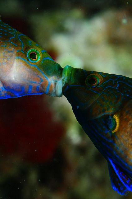 Kissing fish?