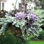 canadiangardening.com Succulent garden idea