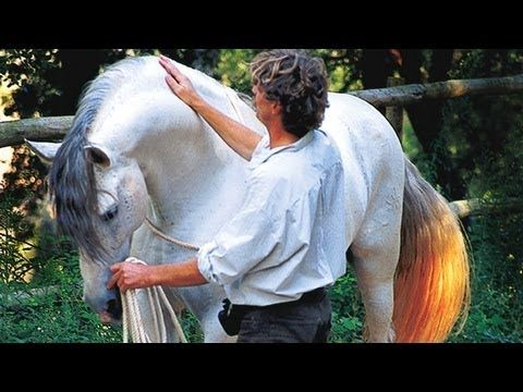 Hempfling - Life In Each Breath - The art of leading a horse