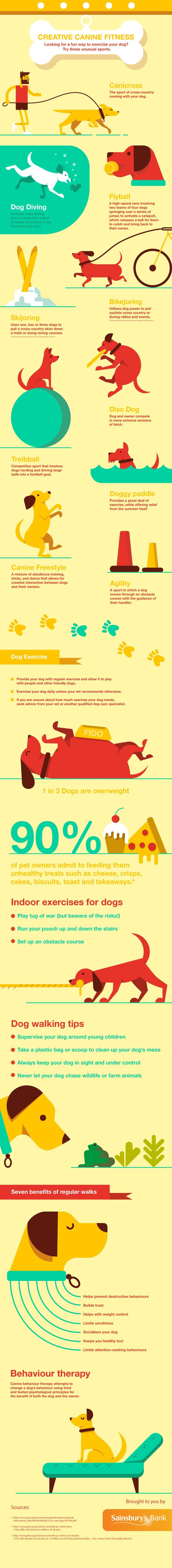 429 best dogs images on pinterest doggies dog cat and dog fitness infographics slimdoggy nvjuhfo Choice Image