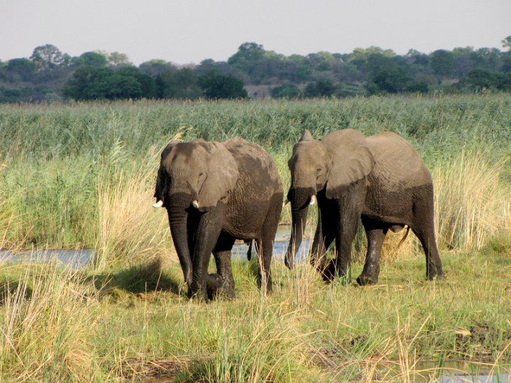 African Walkabout