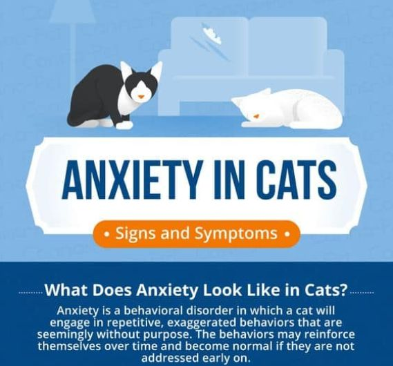 Anxiety In Cats: Signs And Symptoms