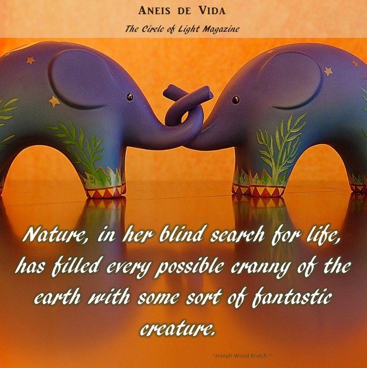 Nature ...  http://aneisdevida.co.za
