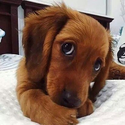 Cutest of The Cute
