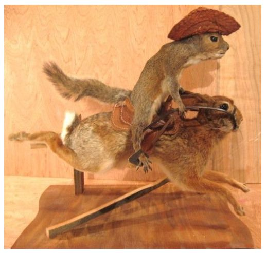 taxidermy squirrels - Google Search | Cool Squirrels in ...