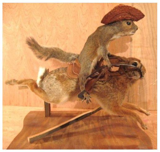 Decor: Taxidermy squirrels