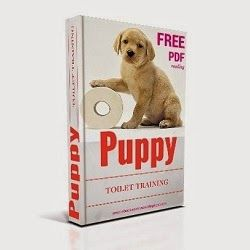 Toilet training your puppy should be quite a simple process, as long as you take the time and trouble to get into a good routine. Initially, you will have to build your routine around your puppy's needs, and these are reliably predictable when they are very young. Puppies need to urinate immediately after waking up, so you need to be there to take your puppy straight into the garden without any delay.