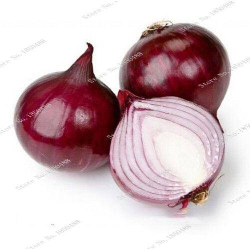 0.66$  Watch now - 200pcs Giant Onion Seeds Russian Heirloom Garden Supplies For Fun Interest DIY great popular healthy vegetables friut plants   #buyonline