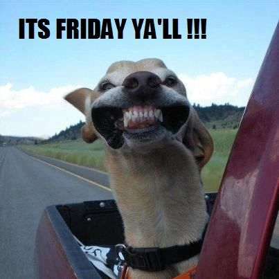 "It's Almost Friday Meme | ... with head out of window funny meme saying ""it's friday ya'll"