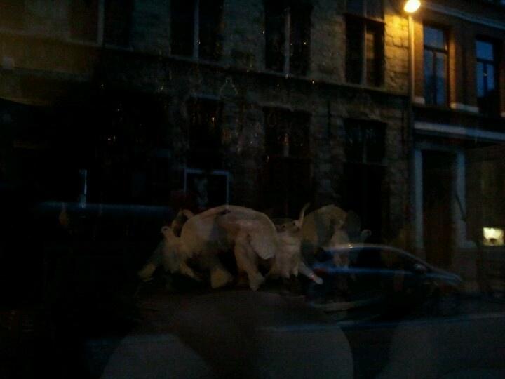 Kloosterstraat Antwerp doves by night
