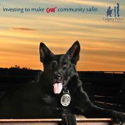 Calgary Police Service 2015 Canine Unit Calendar | 13-month calendar for the year 2015, highlighting the working dogs of the Calgary Police Service. This calendar supports the Calgary Police Foundation, with all proceeds going towards programs for youth and families.