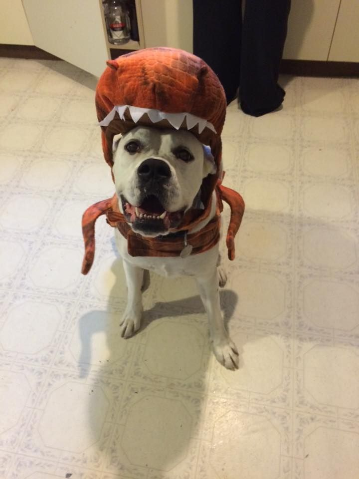 92 best Howloween images on Pinterest | Halloween ideas ...