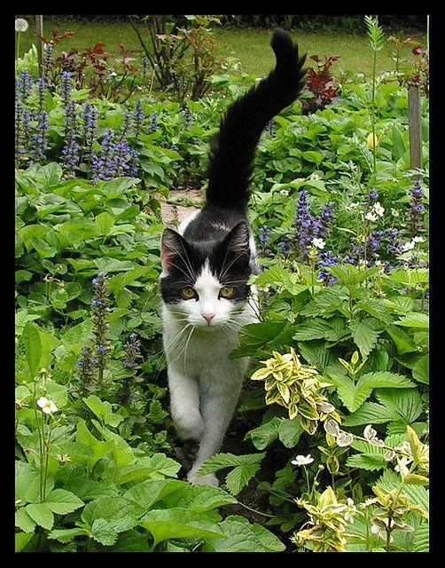 cat in the garden. . .
