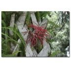 24 in. x 16 in. Air Plant in Pink Canvas Art