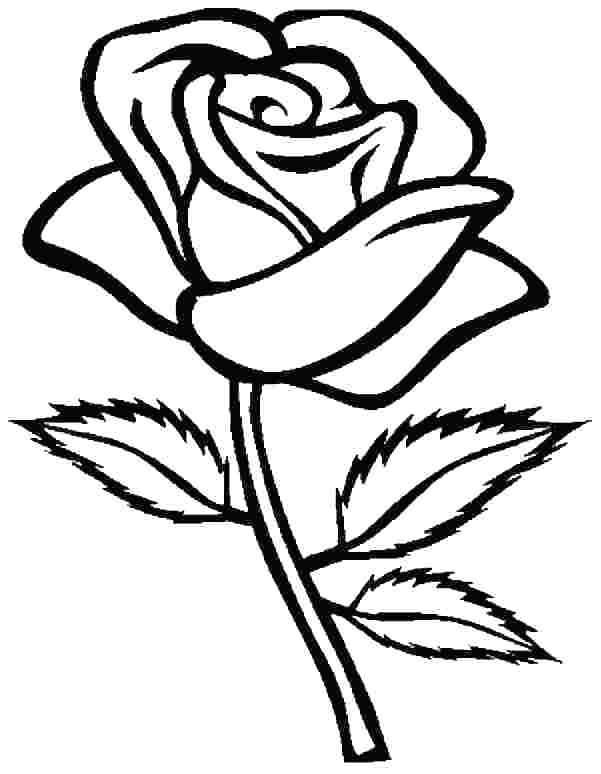 Printable Rose Coloring Pages For Everyone Rose Coloring Pages
