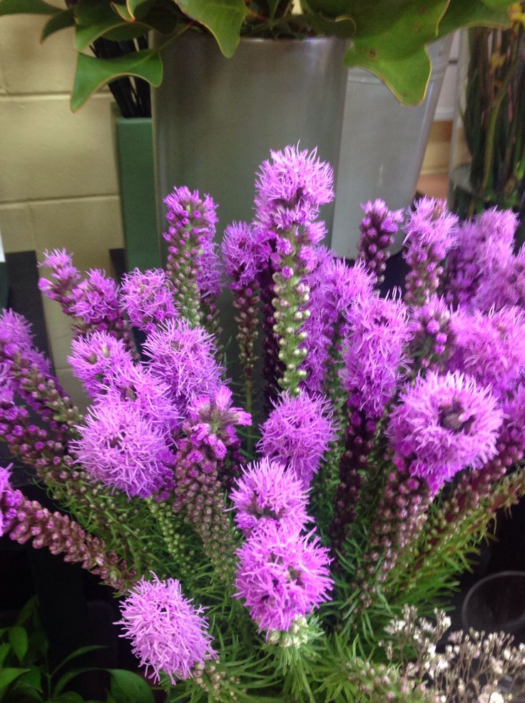 Just Arrived ( Purple Liatris tropical Flowers ) They look great in a nice tall Glass Vase.