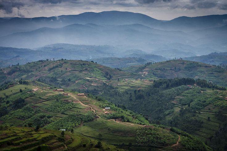 Verdant, rolling fields and hills in Rwanda