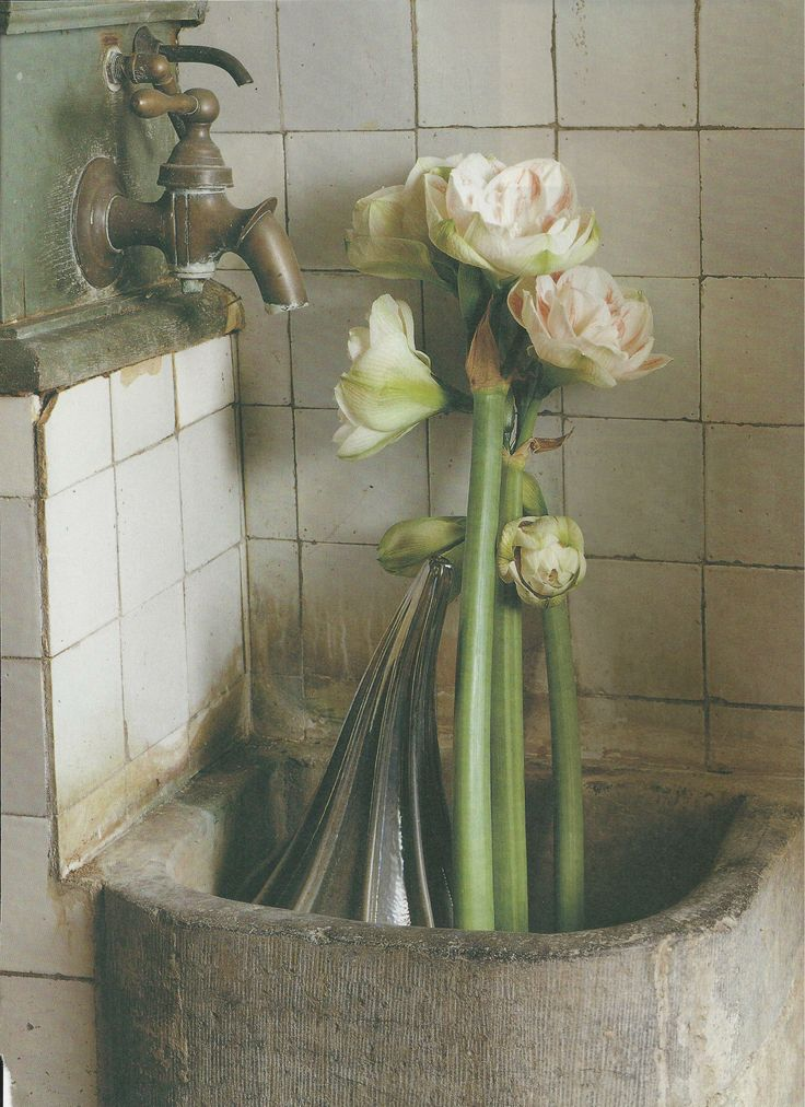 amaryllis bath
