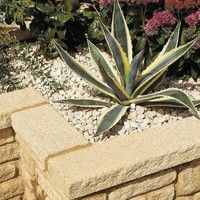 Bradstone Textured buff coping stones  580L x 136W x 50H Individual Unit