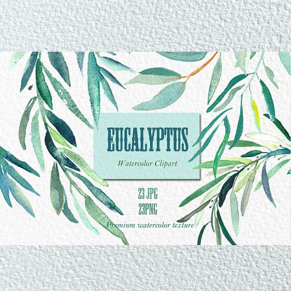 Eucalyptus branches Watercolor Hand drawn clipart set Eucalyptus. Romantic wedding, tender, green mint colors. Romantic et tender composition with watercolour olives.Wedding clip art. This hand drawn floral watercolor is ideal for use in your digital creations such as card template designs, for your logo, on your blog, invitations, digital projects, sites, scrapbooking, wedding invitations etc.! Each element was painted on watercolour paper. Sizes can be manipulated in editing software such…
