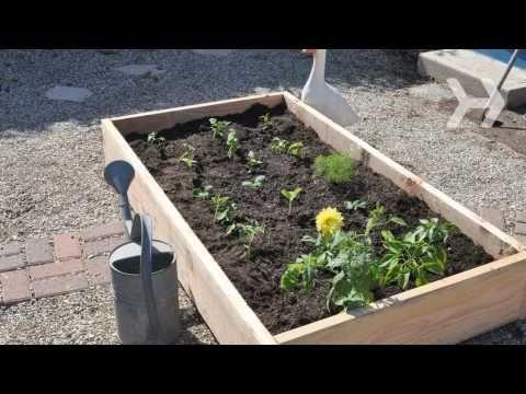 Video How To Start A Vegetable Garden From Scratch Growmethod Recipe Jardin Pinterest