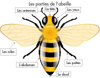 Eveil - l'abeille