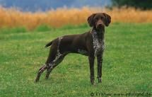56 best images about Dogs on Pinterest | Giant schnauzer, Dalmatians ...