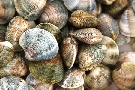 Vongole dell'Adriatico cucinate alla 'pureta', tipica ricetta di FanoIngredienti 1 kg di Vongole (non le 'veraci'!) 4 cucchiai di Olio extravergine di oliva 2 spicchi di Aglio tritato 1 mazzetto di Prezzemolo Sale Pepe