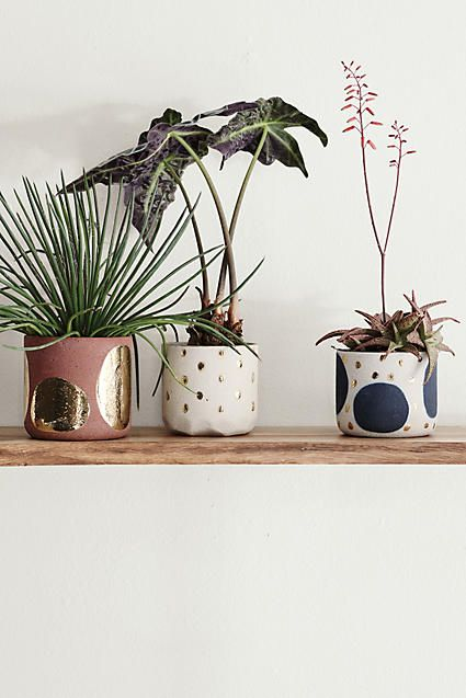 Maak je urban jungle éxtra gezellig met kleurrijke plantenpotten