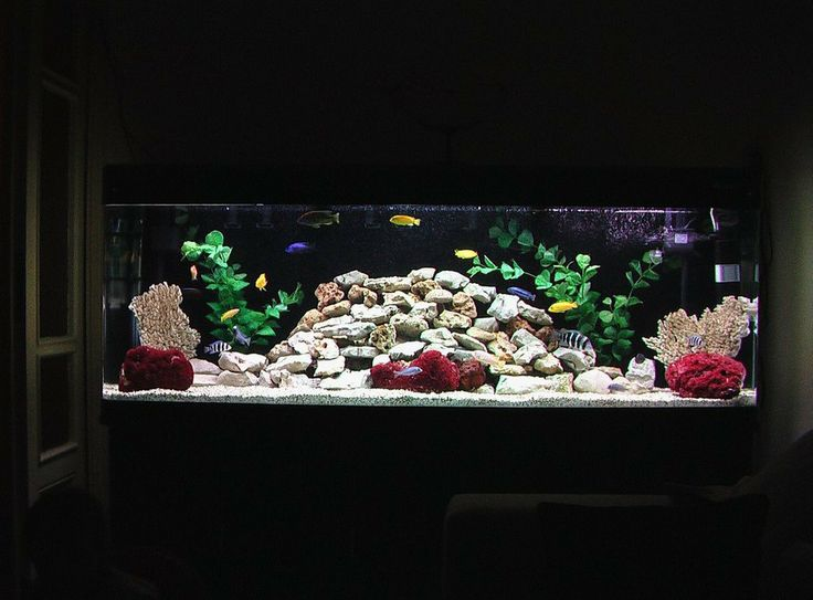 28 best images about fishy fishy fishy on pinterest for African cichlid tank decoration