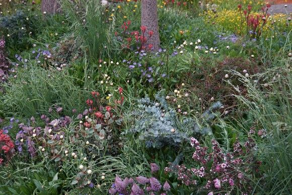 Australian Native Planting  in Trailfinders Garden presented by Flemings Nurseries Chelsea Flower Show 2013