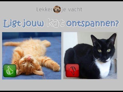 Stress bij katten herkennen - Lighouding