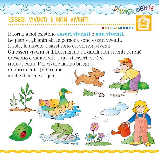 Attorno a noi possiamo trovare:   -  esseri viventi  (persone, animali, piante)   - esseri non viventi  (terra, pietre, nuvole)   Gli ess...