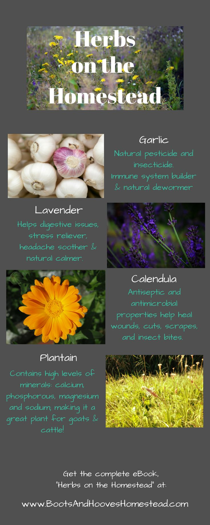 In this herbal guidebook, I am sharing the benefits of the most common herbs, how you can incorporate them in your homestead.