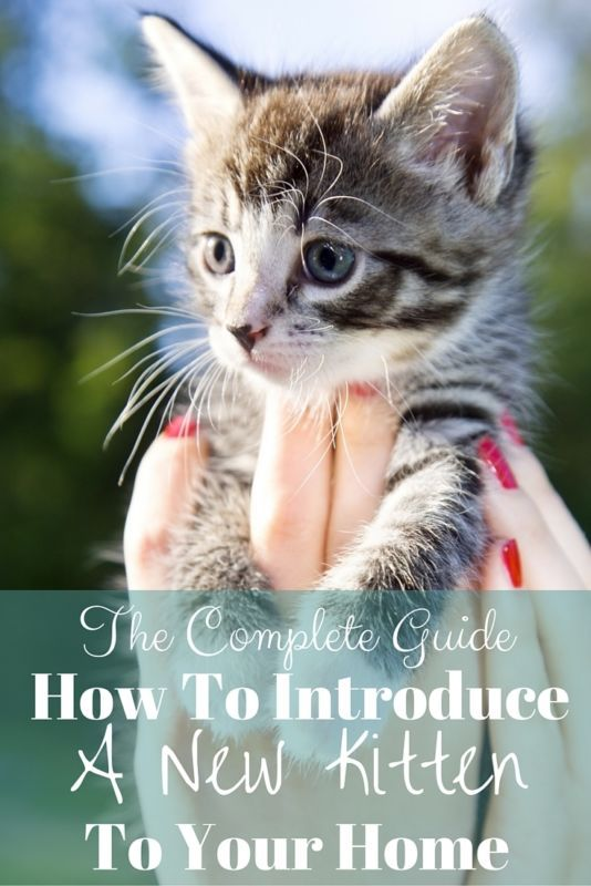 These tips all worked for us! How To Introduce A New Kitten To Your Home. AD