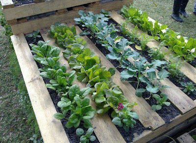 Pallet with a garden cloth stapled to the underside to prevent weeds.