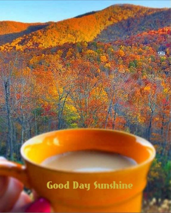 Good day Sunshine  !
