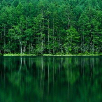 大自然は美しいものです。 こんなに緑一色の世界を見たことがありますか。 思い出と一緒に持ち帰りたくなる景色がここにあります。