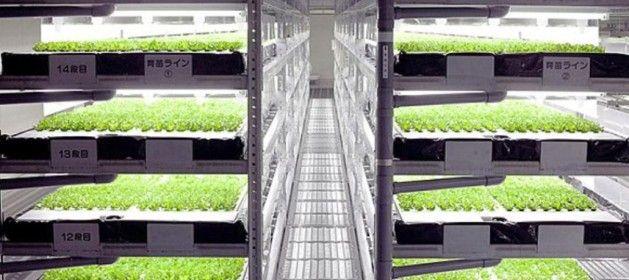 Una empresa japonesa pondrá en marcha la primera granja del mundo operada por…